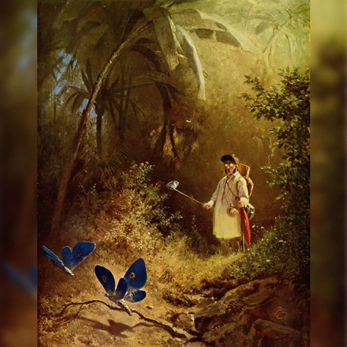 victoriaanse-vlindervanger