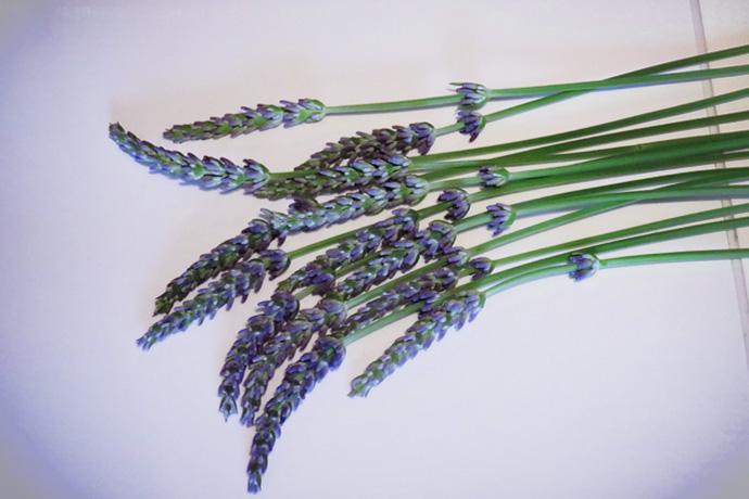 lavendel-stokjes-bundel