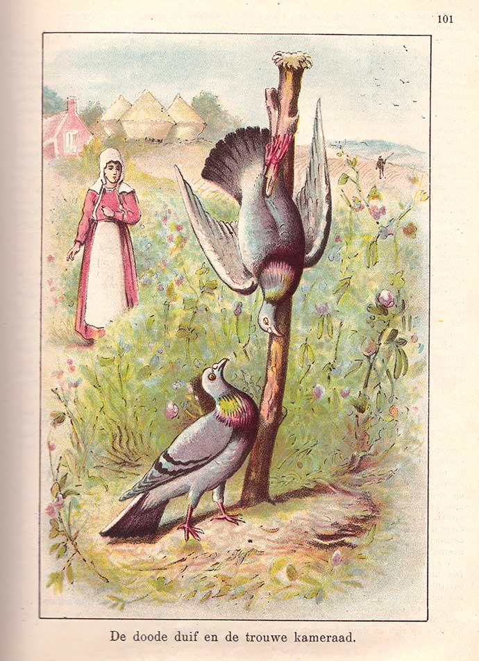 weekblad-dode-duif