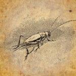 Nog een kerstverhaal van Charles Dickens: The Cricket On The Hearth