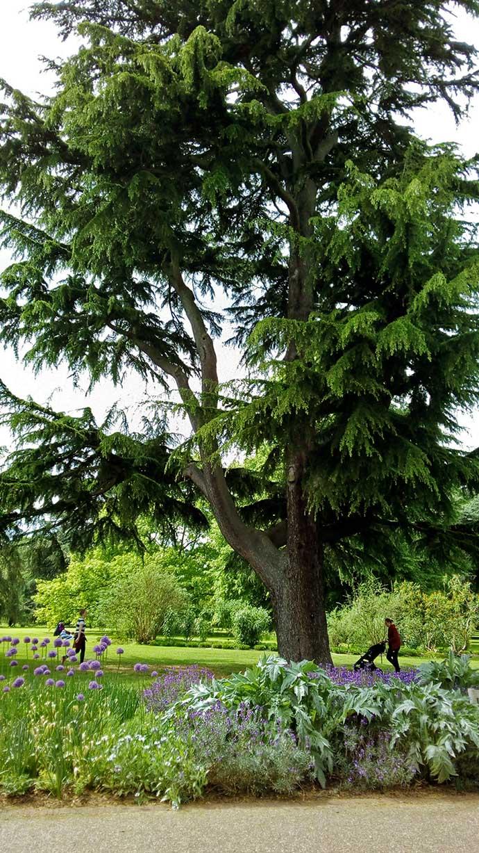 Kew Gardens boom