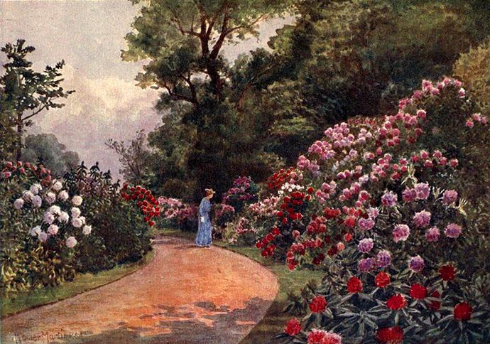 rodondendron walk Kew Gardens