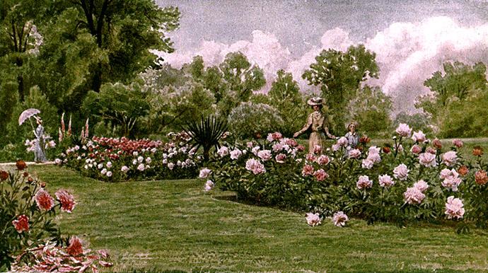 the peonies pioenrozen in kew gardens