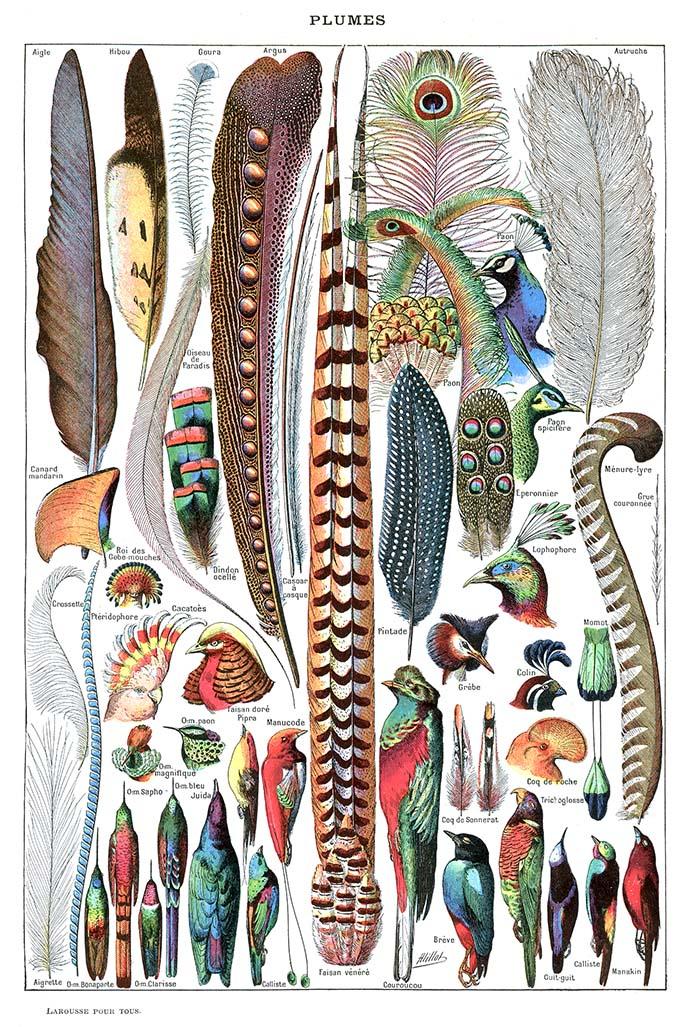 victoriaanse-hoeden-vogel-pluimen-1907-1910