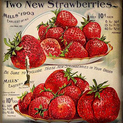 recept voor aardbeienjam