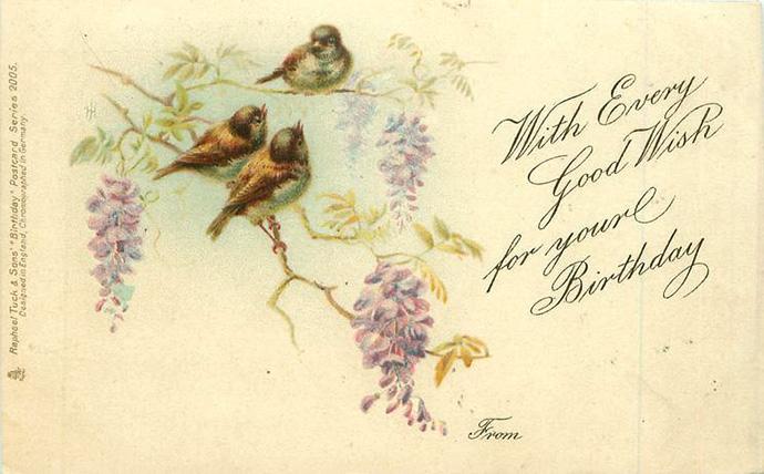 Een Edwaardiaanse verjaardagskaart met daarop drie musjes tussen blauwe regen, uitgegeven door de firma Tuck & Sons in 1904.