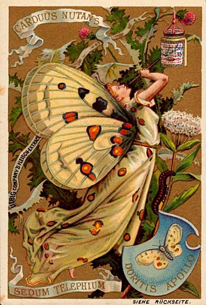Liebig vlindermeisjes
