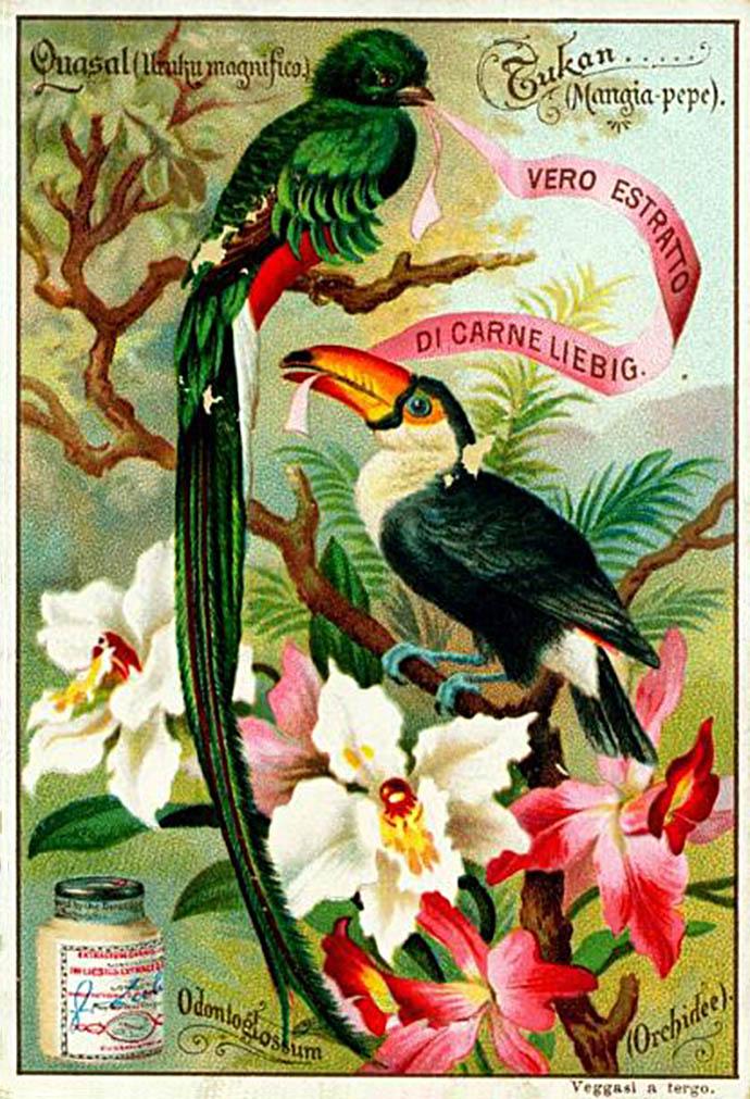 Liebigkaart vogels en bloemen